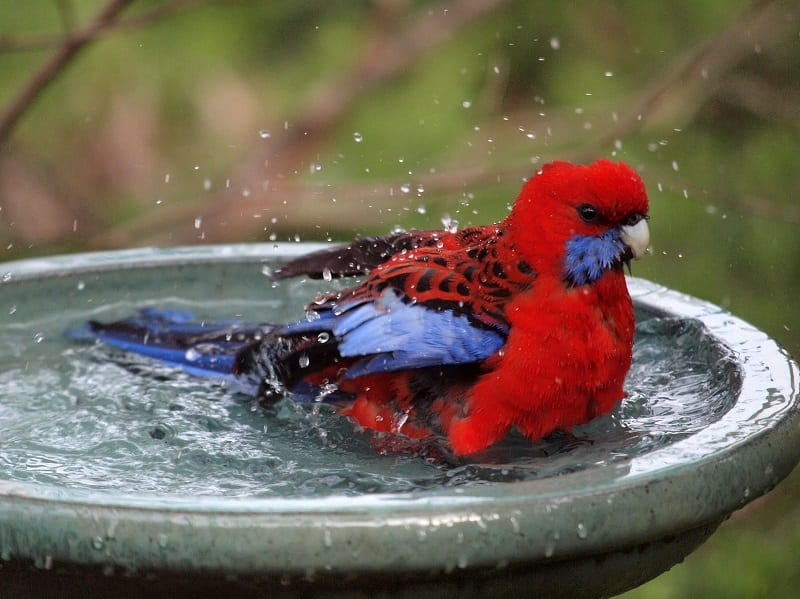 Put out water for birds.