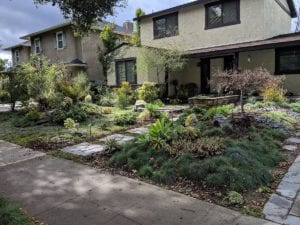 Drought-Proof Gardening and the Big Dry