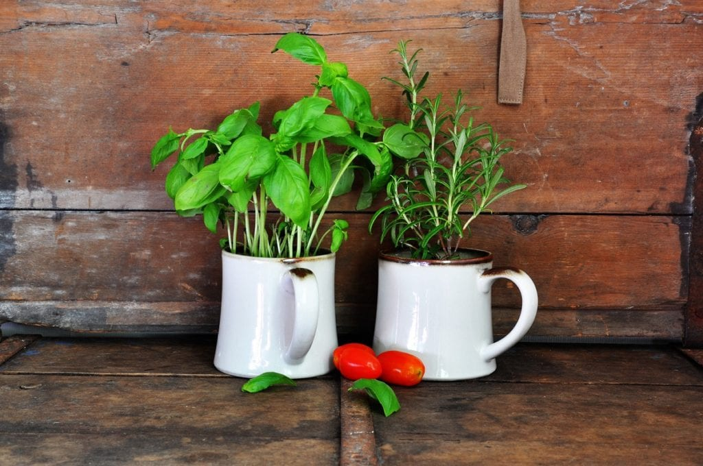 7 Herbs You Can Grow Indoors