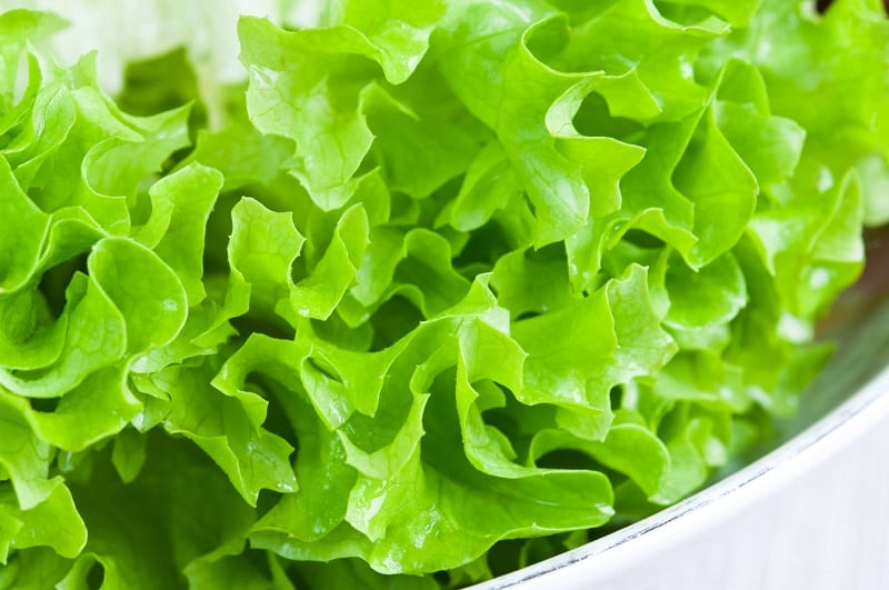 Lettuce is definitely one of the best vegetables to grow in winter.