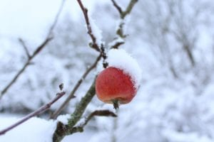 8 Winter Tasks to Prepare Your Garden for Spring