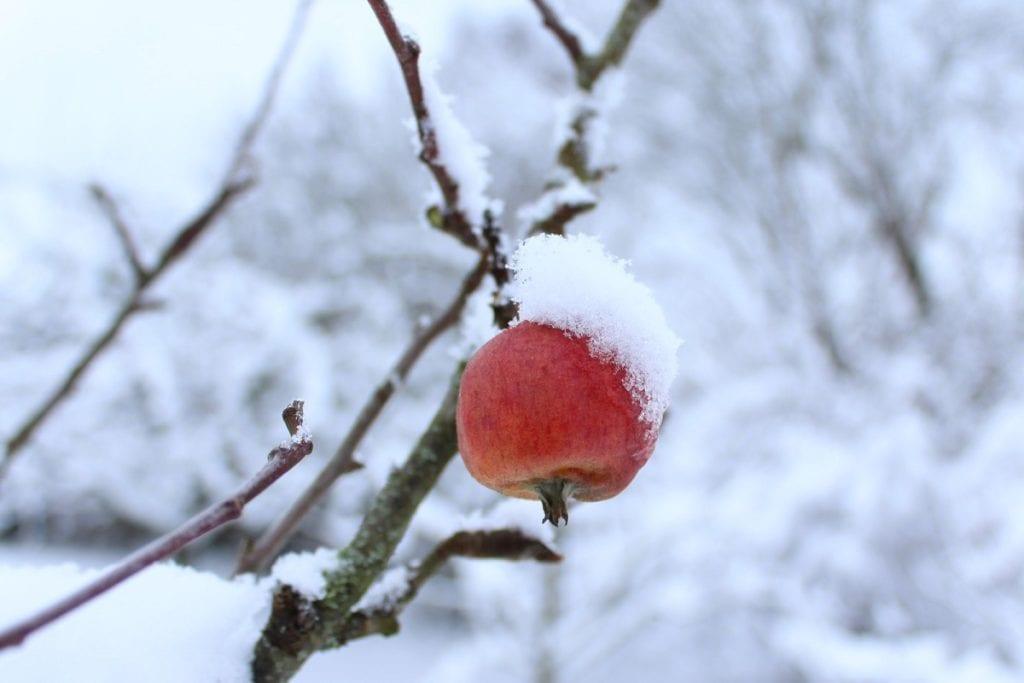 8 Winter Tasks to Prepare Your Garden for Spring