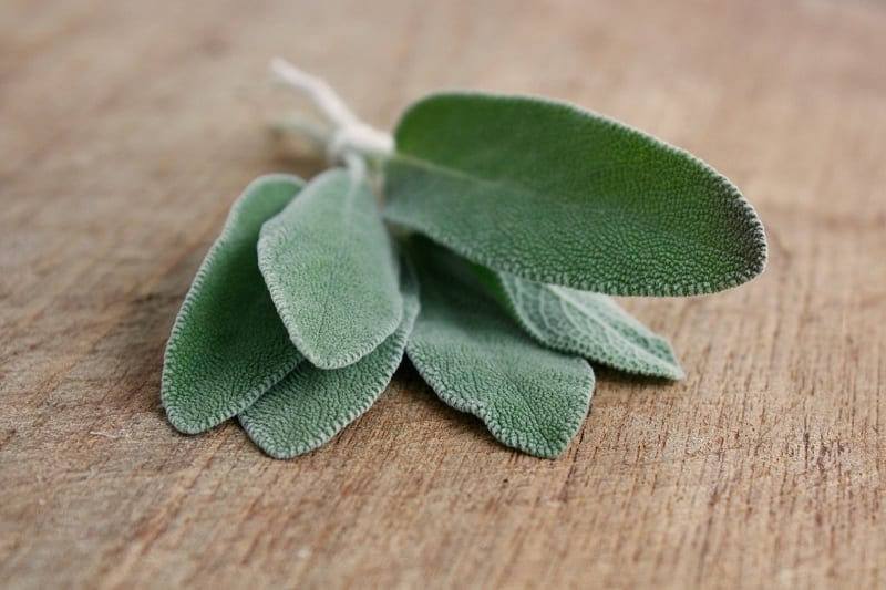 Sage thrives in well-drained, sandy, loamy soil under medium to full sun.