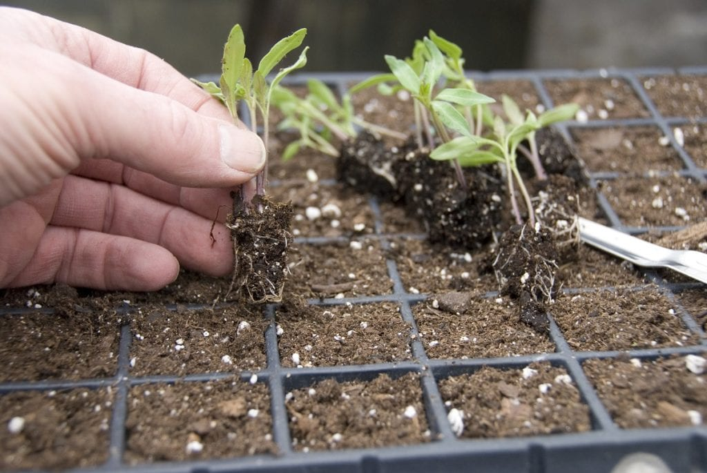 Great Gardening Tip: Start Seeds Indoors in Winter