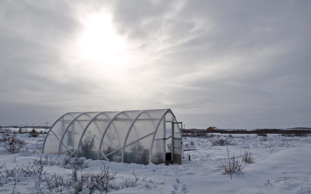 Learning which vegetables to grow in winter, from November through March, starts with learning a little about winter harvesting.