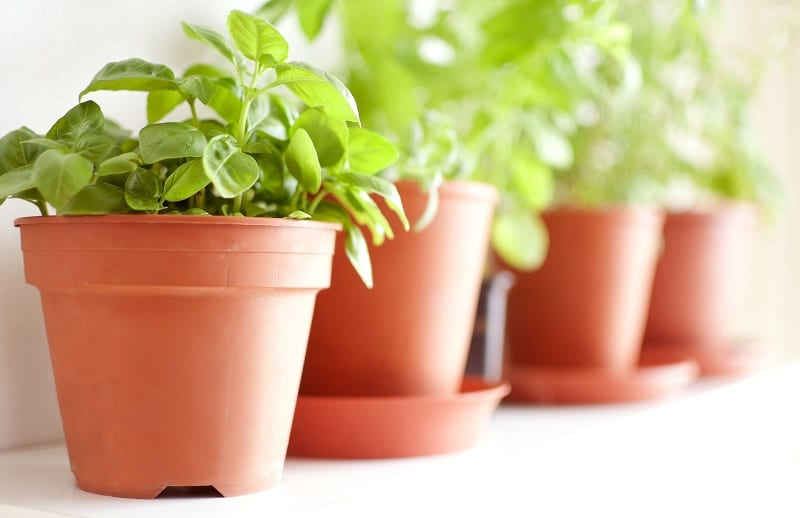 You can grow your herbs from young plants or start them from seeds.