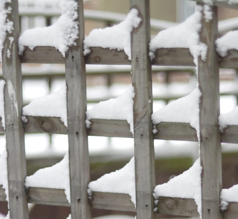 Check your fence panels, gates, and trellis for any sign of weather damage or decay.