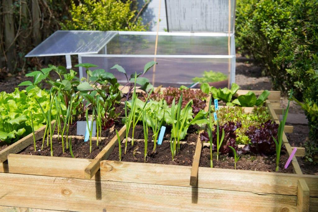 A Beginner's Guide to Starting a Garden