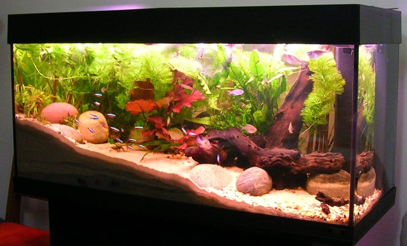 Instead of pouring soiled aquarium water down the drain, use it to water and fertilize your indoor garden.