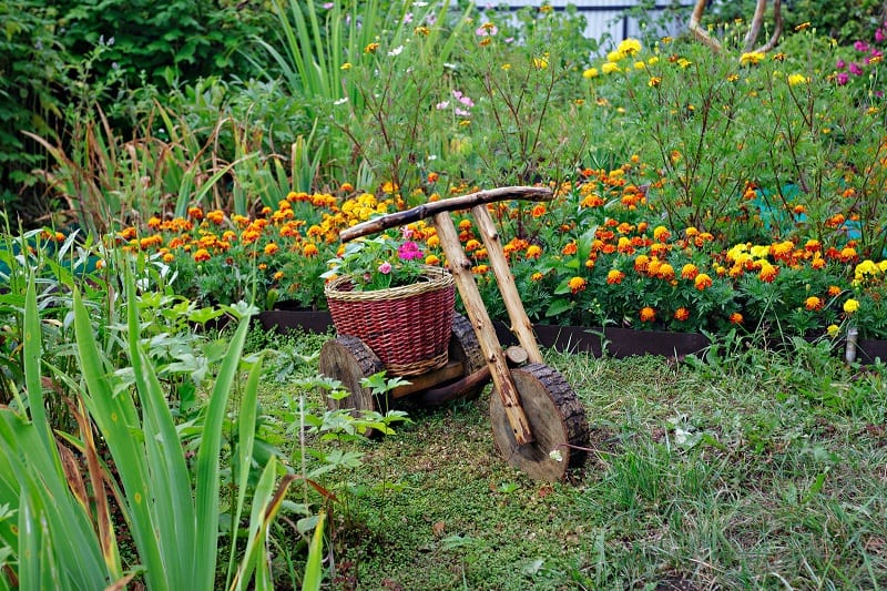 If you have small patches of many kinds of plants, you will limit losses to pests and diseases.