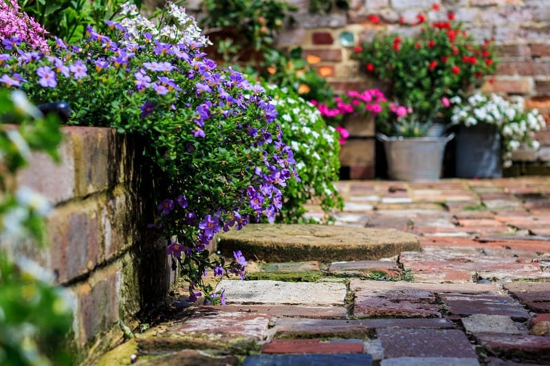 Plant flowers at the edge of garden beds and allow them to tumble over onto paths.