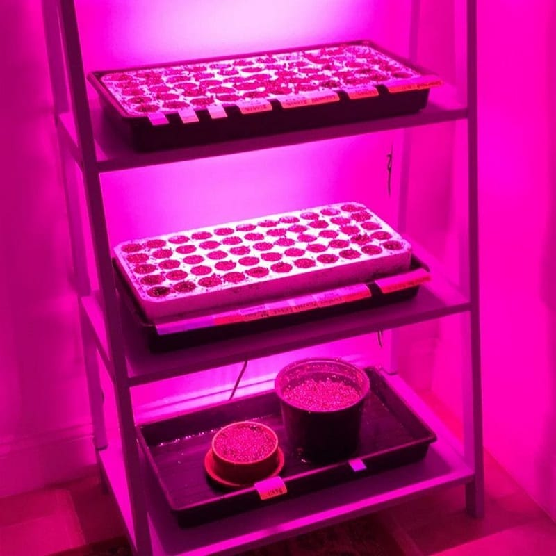 Grow lights are better for your indoor plants' health than standard light bulbs.