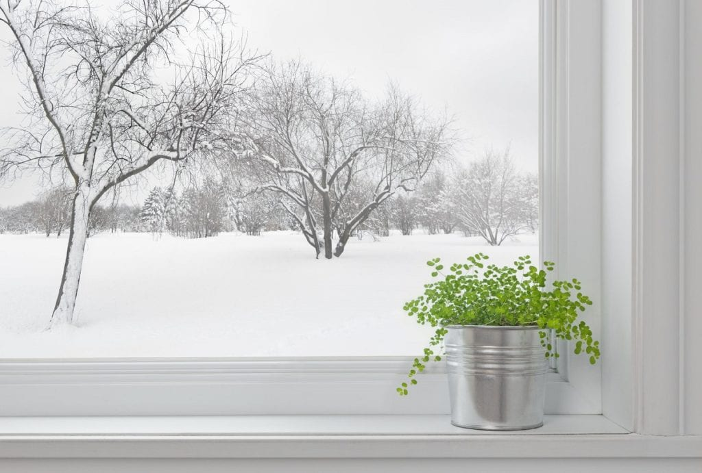 How to Care for Indoor Plants in Winter
