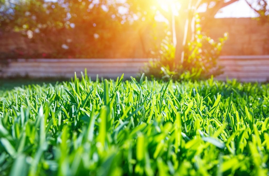 Fertiling Your Lawn the Right Way