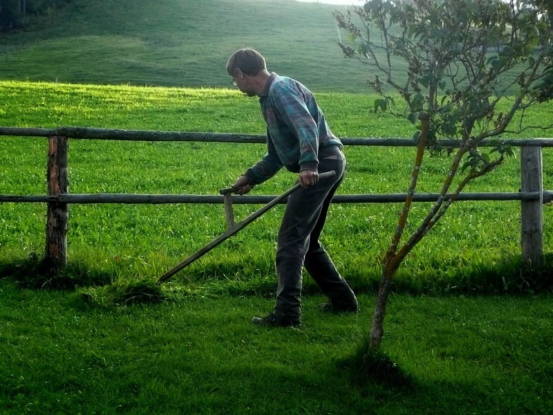 You can use a hand scythe or a strimmer for smaller areas.