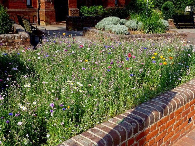 A mini-meadow is essentially an area that gardeners have restored to the charge of nature.