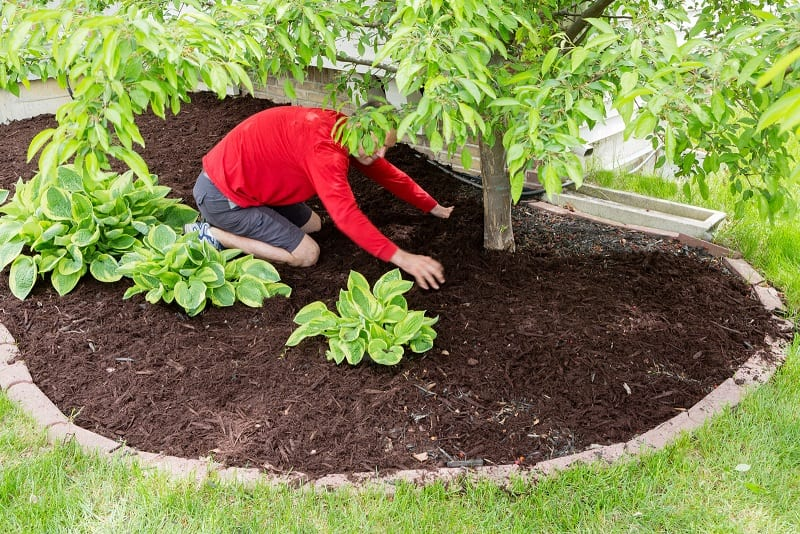 Did you know that mulching can reduce the plants' water needs as much as 50 percent?