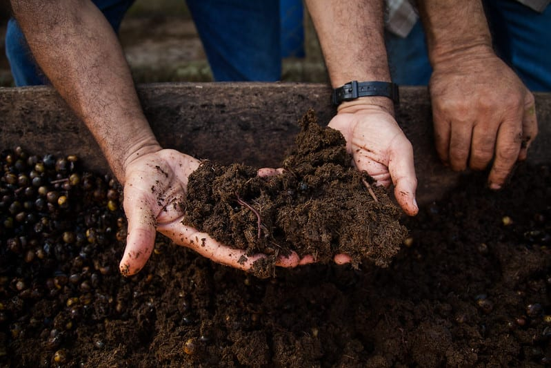 Be sure to work a good amount of organic fertilizer into the top 3 to 4 inches of soil before planting.