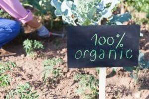 Want to start an organic garden? Here's how.