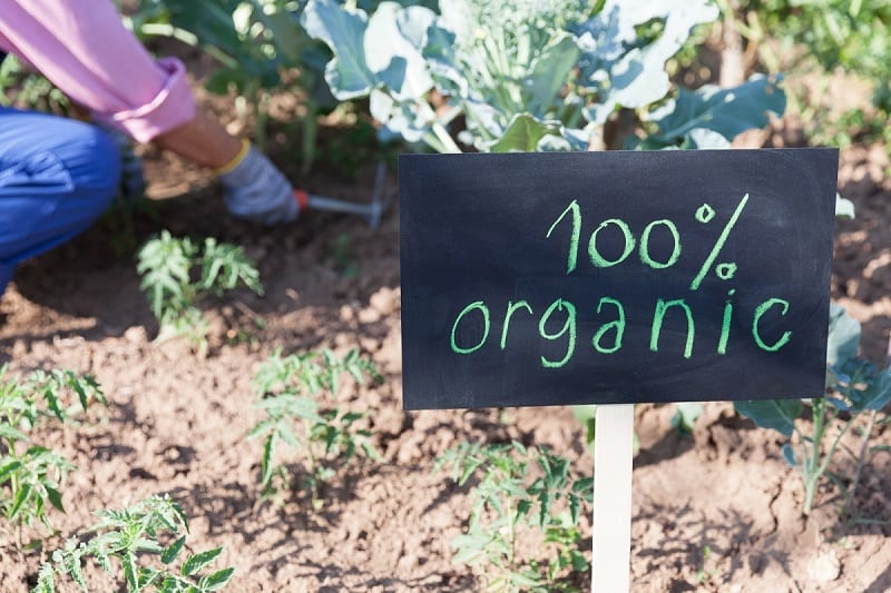 You can grow an organic garden with surprisingly little effort.