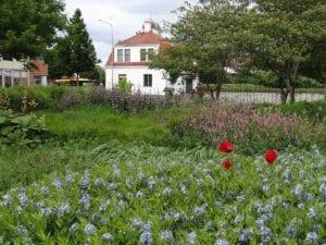 Piet Oudulf's Garden Design Style