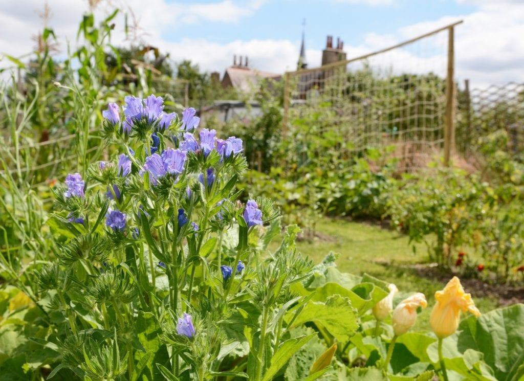 Creating a Potager Garden
