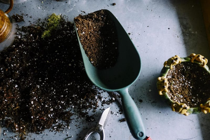 You can use store-bought or homemade potting soil for a growing medium as long as it is clean and sterile.