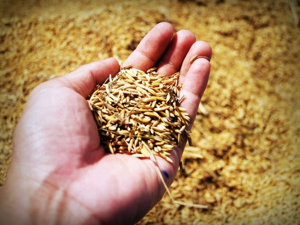 Using Rice Hulls in the Garden