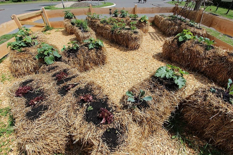 Straw bales are a more convenient alternative to building raised beds or buying pots for a container garden.