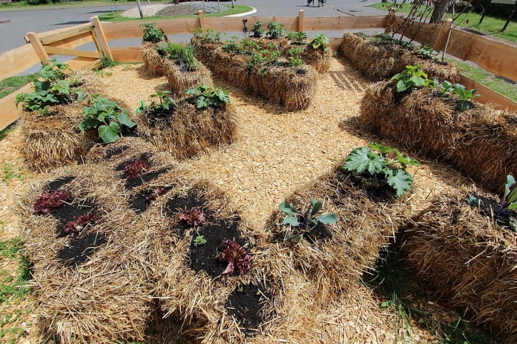 Recyclable Rockery: How to Start a Straw Bale Garden