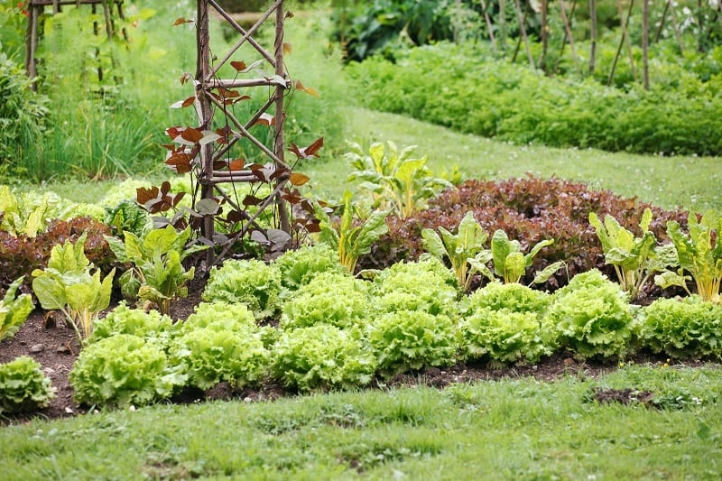 Growing a diversity of crops in your vegetable garden keeps the soil healthy.