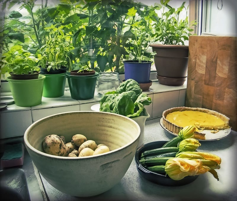 By employing suitable container gardening techniques, you can turn your urban abode into a lush, verdant paradise.
