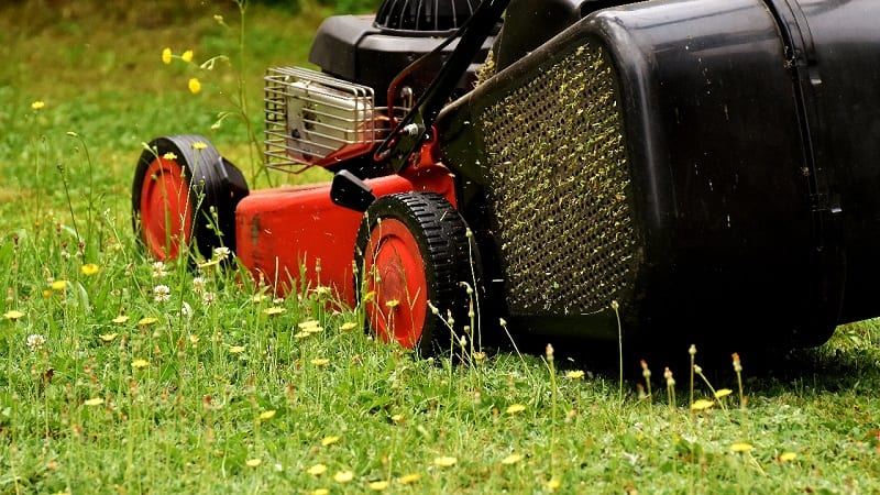 Once your meadow has established itself, you'll need to follow a schedule of cutting.
