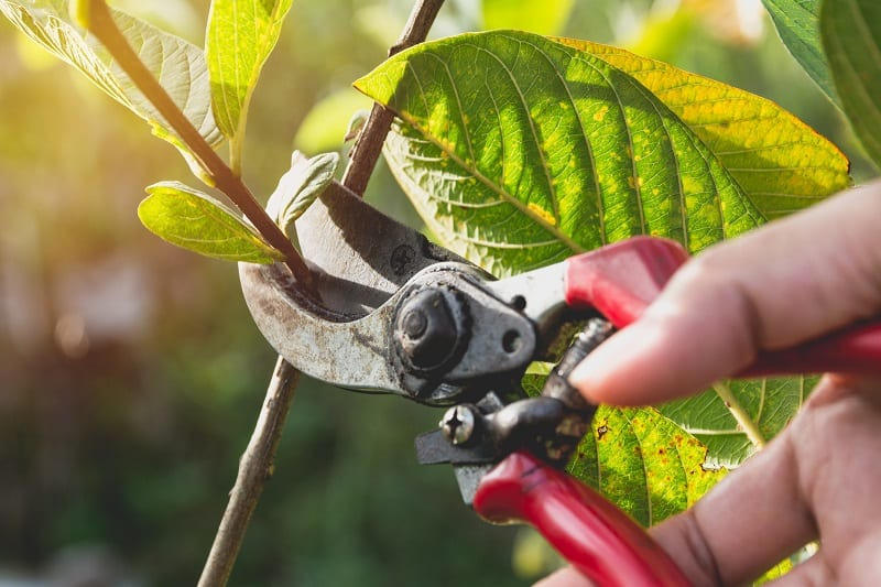 More than cutting, garden pruners allow you to get more creative with your plants.