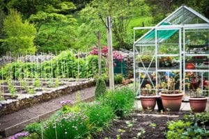 Crop Rotation 101: What it is and Why You Need to Know