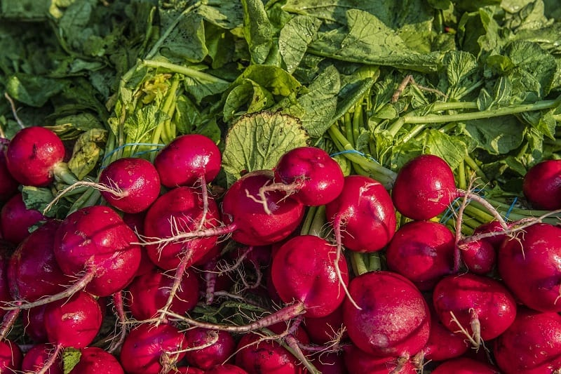 If you prefer to harvest small beets, double the number of seeds in each row.