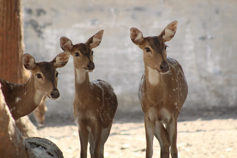 Deer are lovely creatures, but they can wreak havoc on your garden.