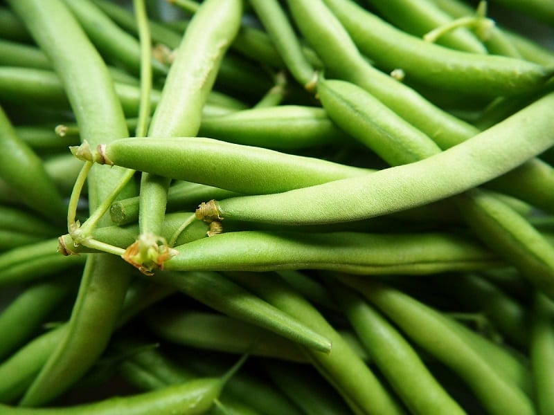 In addition to being a scrumptious and healthy garden treat, green beans can improve soil fertility by setting nitrogen with their roots.