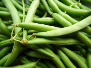 Growing Tips: Green Beans for Beginners