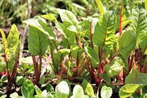 Start a mini edible garden in just one day! Here's how.