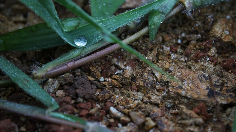Thoroughly soaking the soil with infrequent watering is better than shallow regular watering.