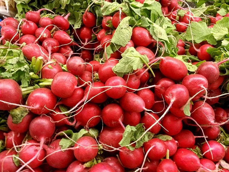 Radishes are perfect for new and especially young gardeners.