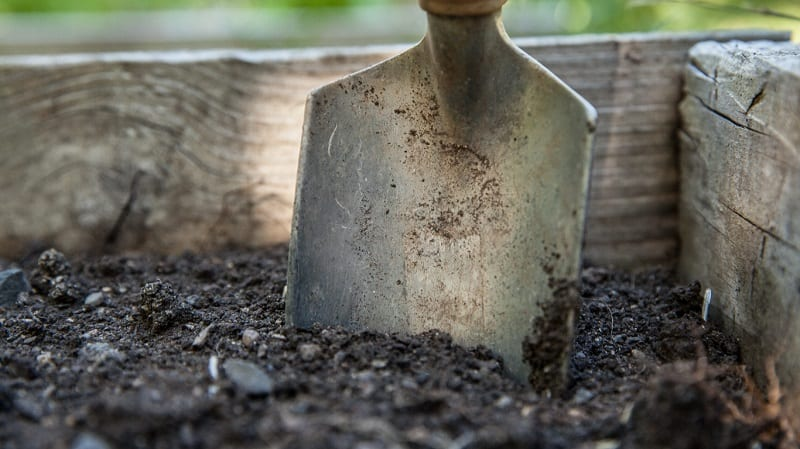 Dig a small hole with a trowel - or just put your hand into the soil - to check for soil moisture.