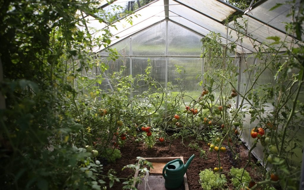 Gardeners' watering habits differ as widely as their gardens.