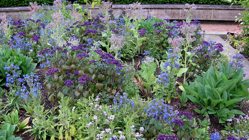 To provide bees with a constant source of food, plant a diversity of plants for season-round blossoms.