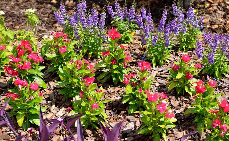 Bee gardens that use 10 or more species of bee-preferred plants attract more bees.