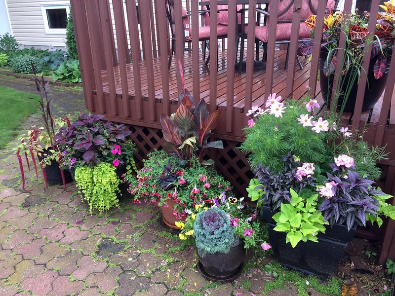 Group your containers together for easier watering and pest control.