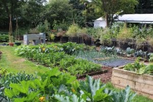 5 Cost-Effective Crops You Can Grow in Your Backyard
