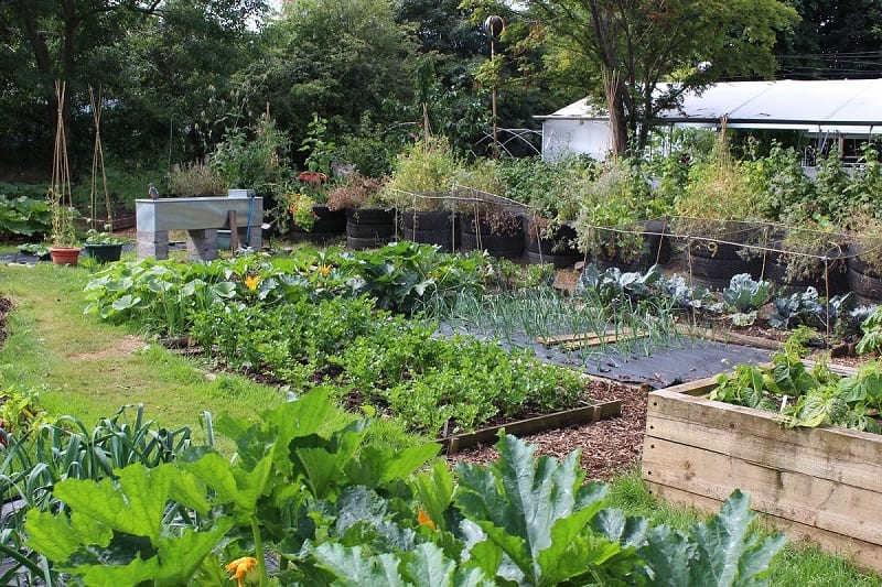 Like many people these days, spending extra time at home may have you thinking about tending to a garden.