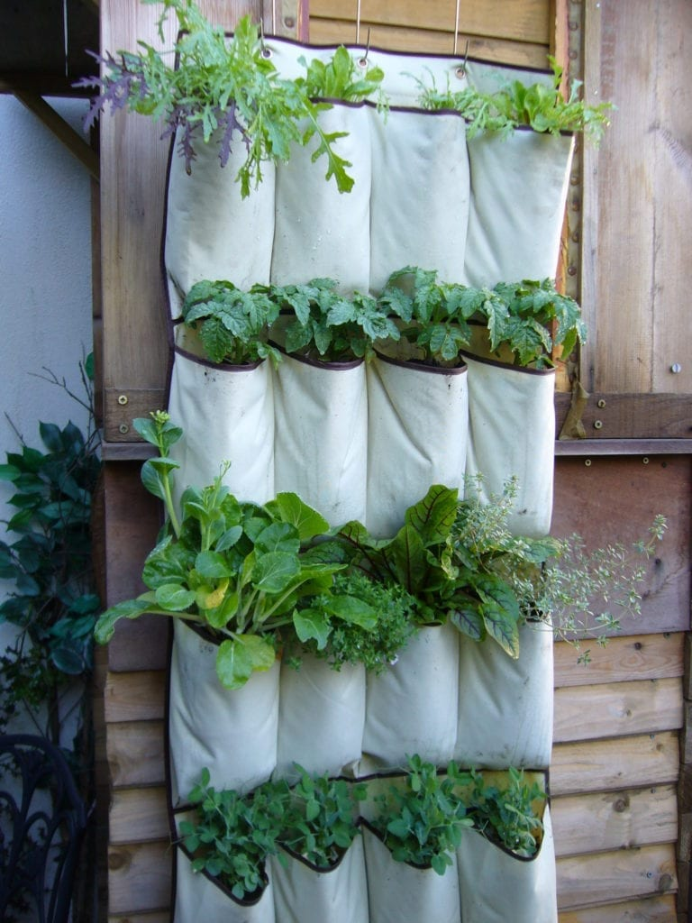 A heavy duty hanging shoe organizer makes an excellent base for a curtain garden.